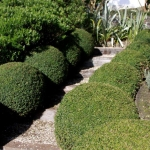 Formal landscaping, Buxus balls