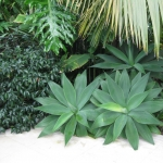 Sub-tropical garden design
