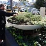 Professional garden care Auckland wide