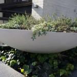 Large saucer planter