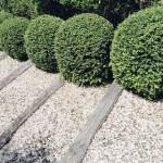 Ornamental hedge maintenance