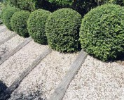 Ornamental hedge maintenance