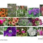 Flowering Courtyard Design