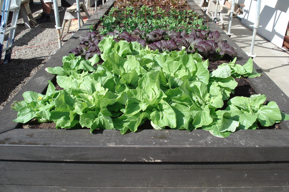 Edible gardens Landscape design garden care services and