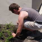 garden creation