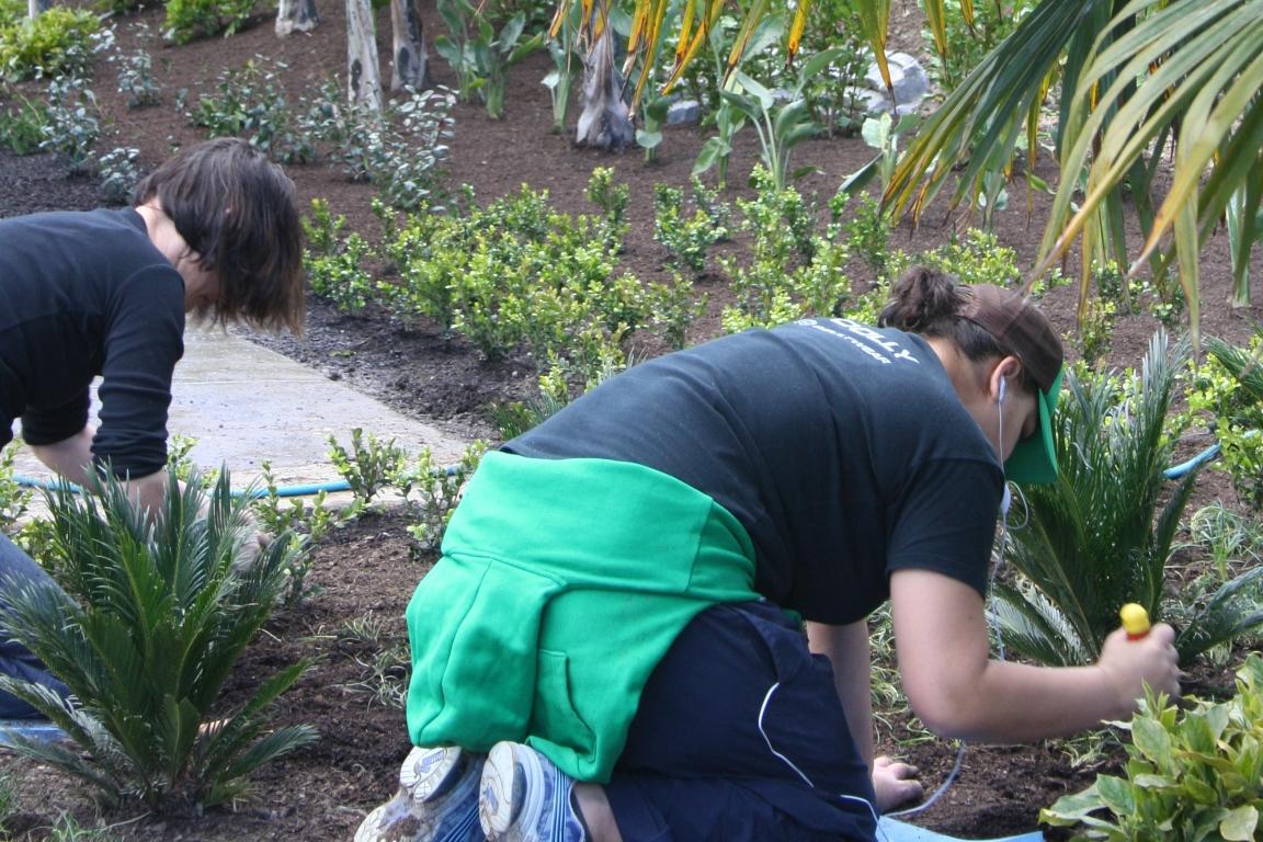 Garden creation landscape design garden care services for Creation gardens