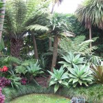 Sub-tropical gardens