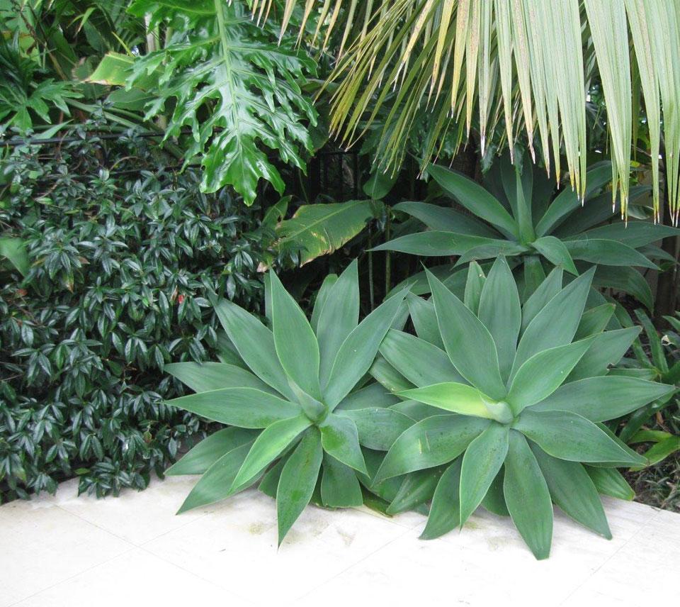 Sub Tropical Garden Landscape Design Garden Care