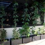 Bespoke steel planters