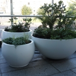 Grouped egg pots, white