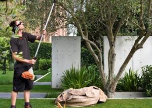 Tree work, maintenance