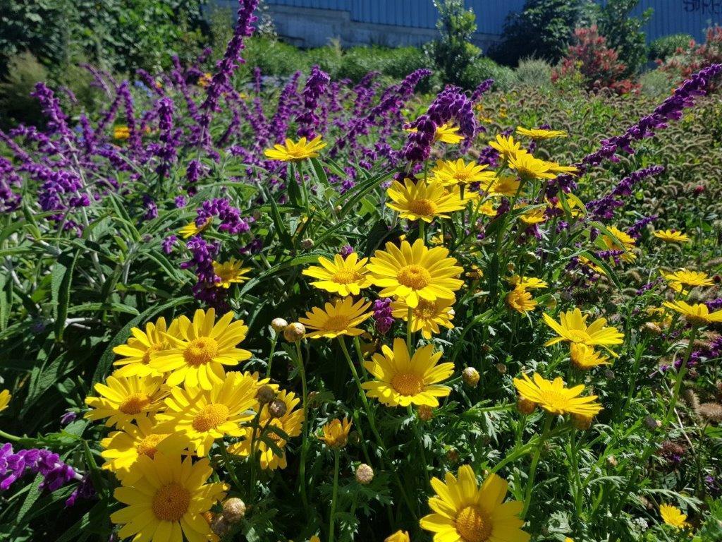 Beautiful yellow and purple flowers
